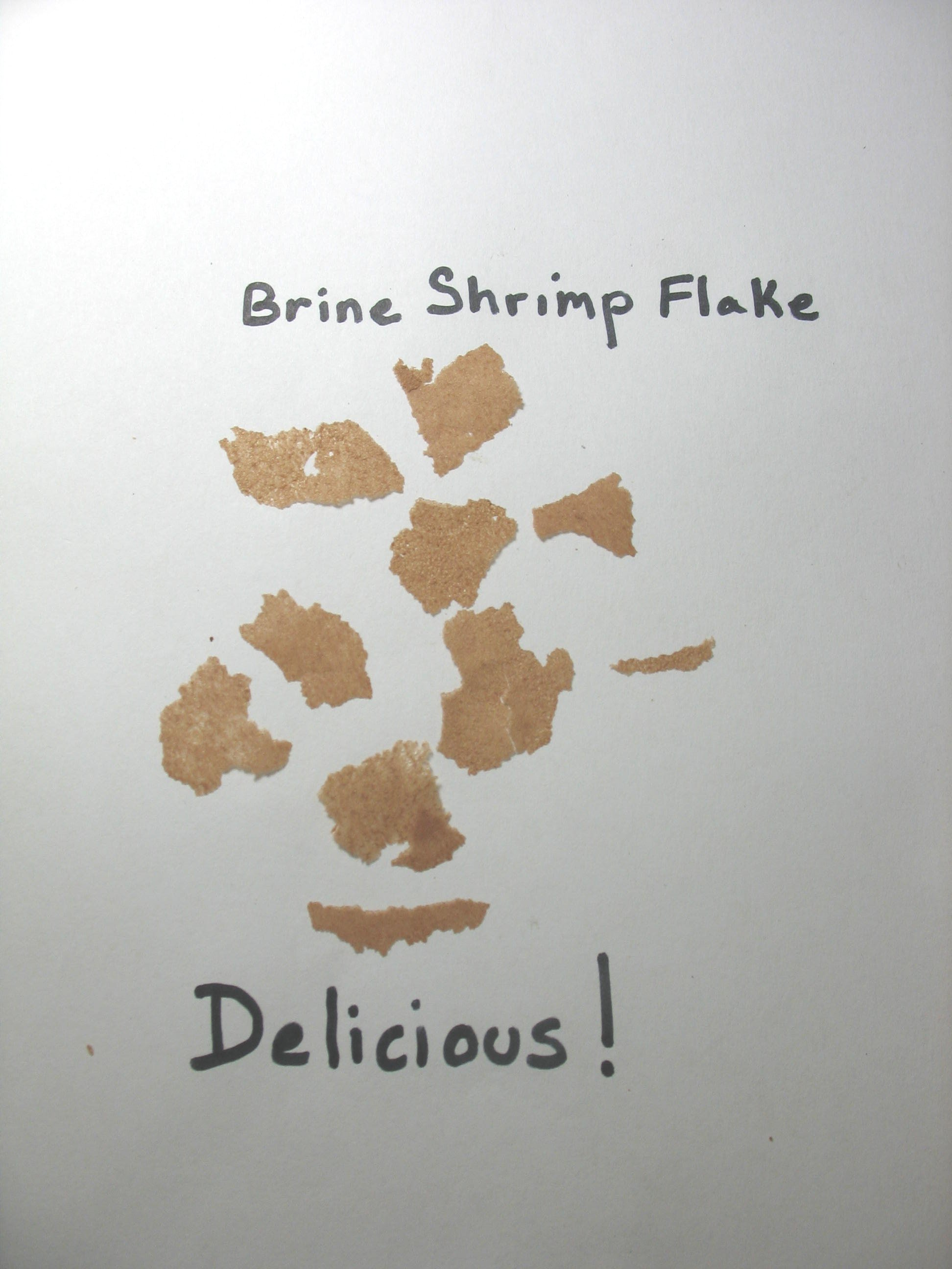 Brine Shrimp Flake Feed